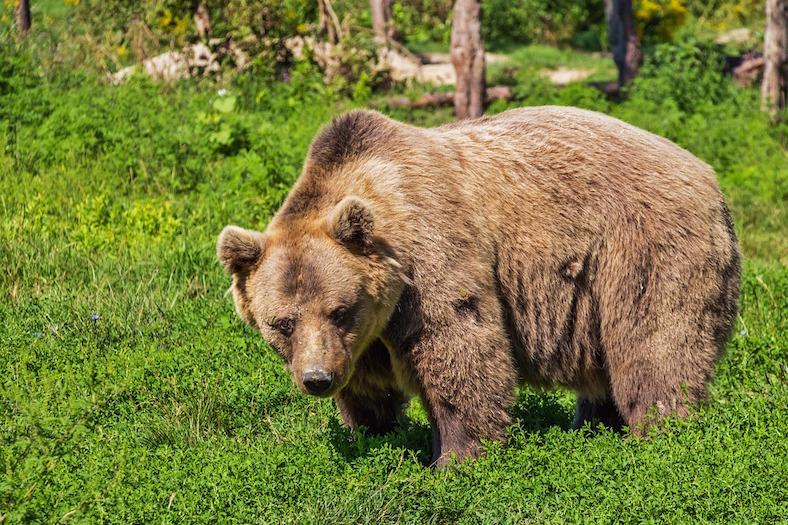 bear-422682_788x525 copy