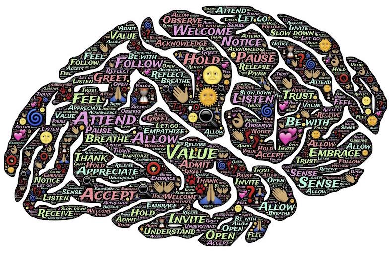 brain-744207_788x509copy