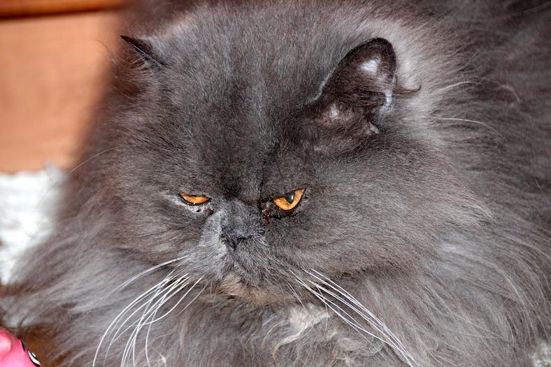 cat-574276_788x525copy