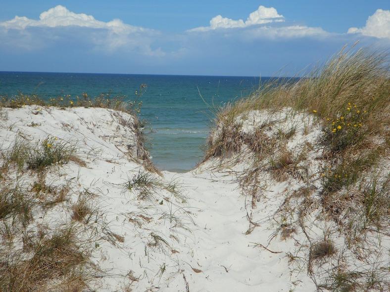 dune-65852_788x591 copy