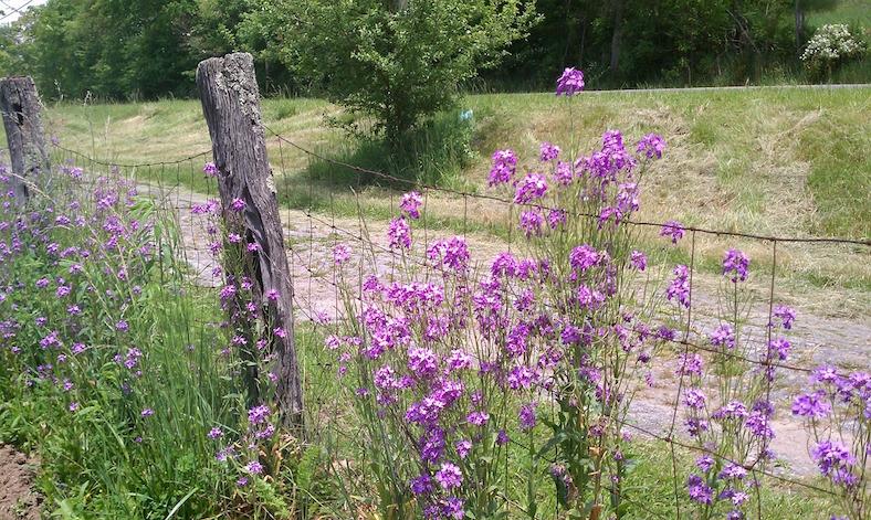 fence-97013_788x471