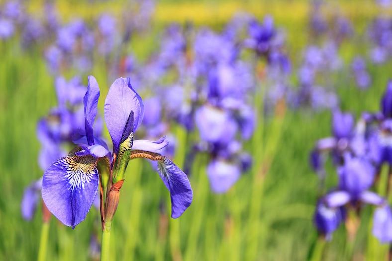 flower-76336_788x525 copy