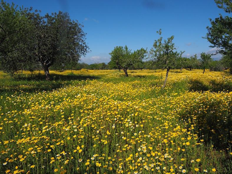 flower-meadow-1090255_788x591 copy