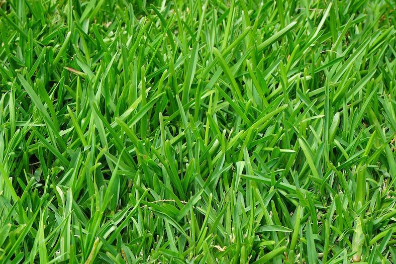 grass-375586_788x525 copy
