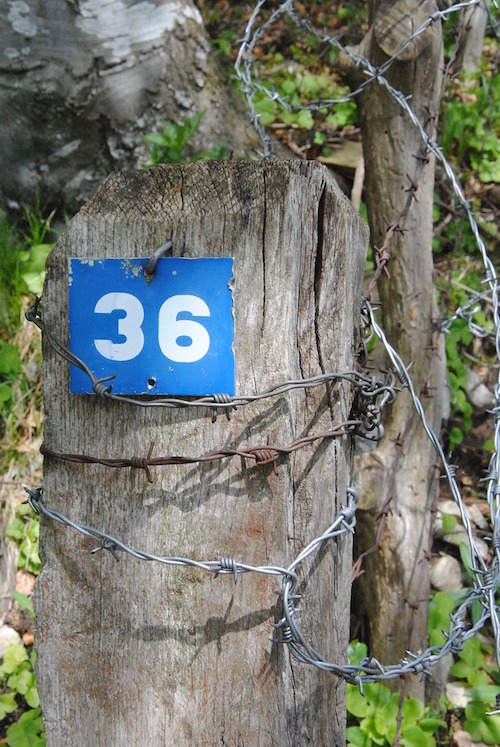 house-number-1548886_500x747