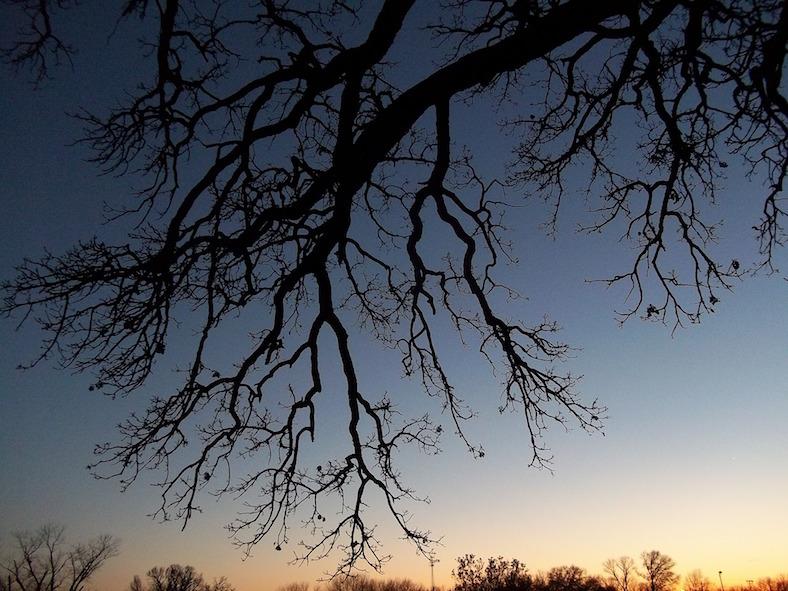 tree-501820_788x591 copy