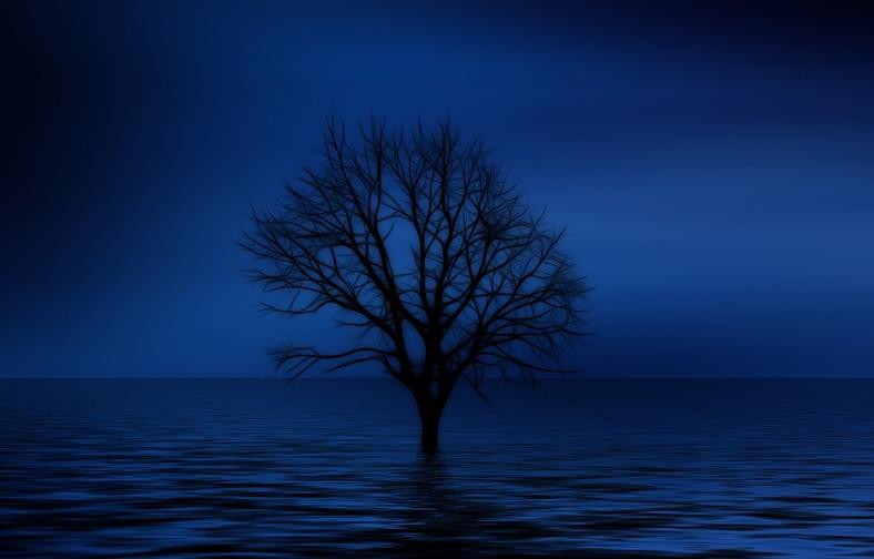 tree-738816_788x504 copy